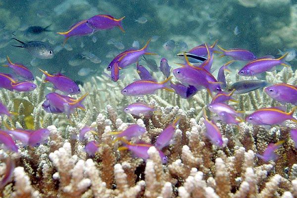 Pulau Bunaken di Indonesia ( Taman Laut Terindah di Dunia )